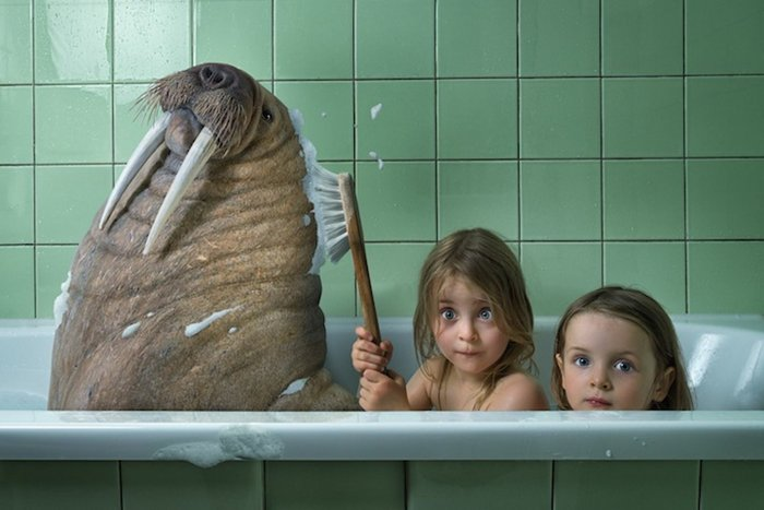 john-wilhelm-walrus