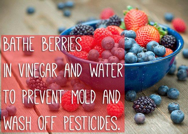 keep-food-fresh-berries