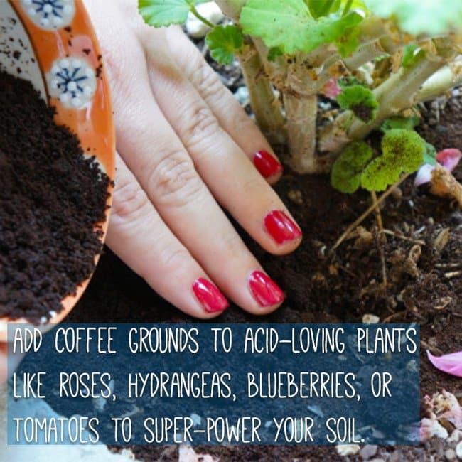 keep-food-fresh-coffee