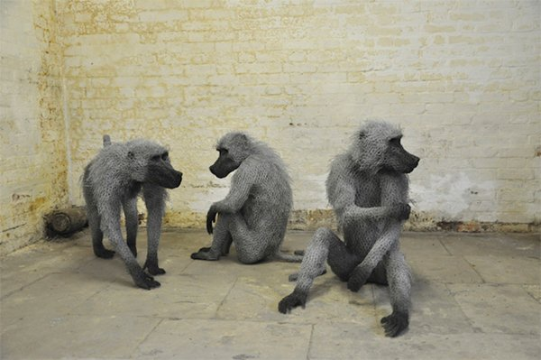 kendra-haste-baboons