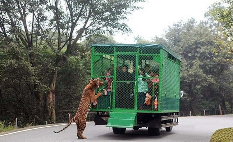 lehe-ledu-wildlife-zoo-tours