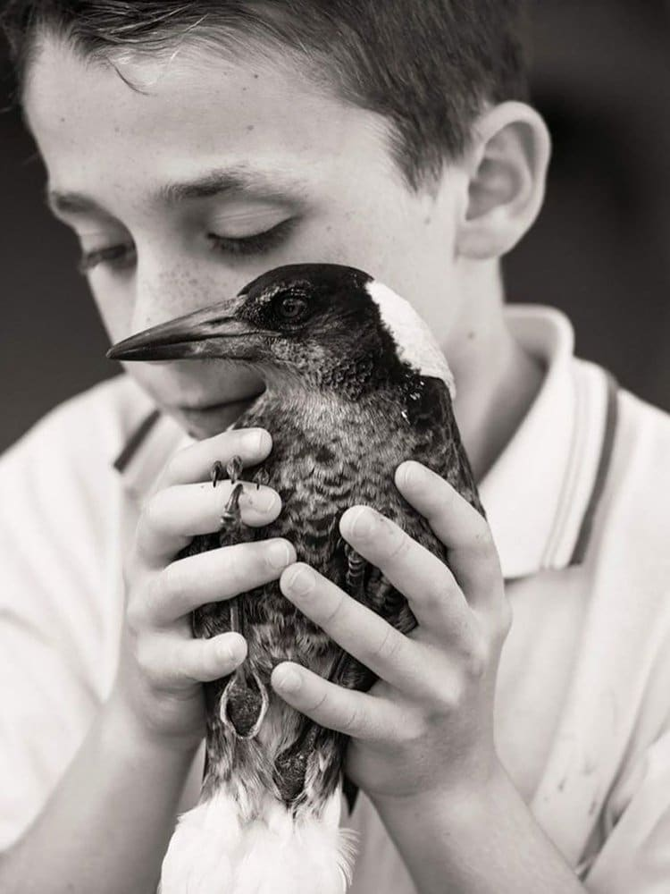 penguin-rescued-magpie-hold