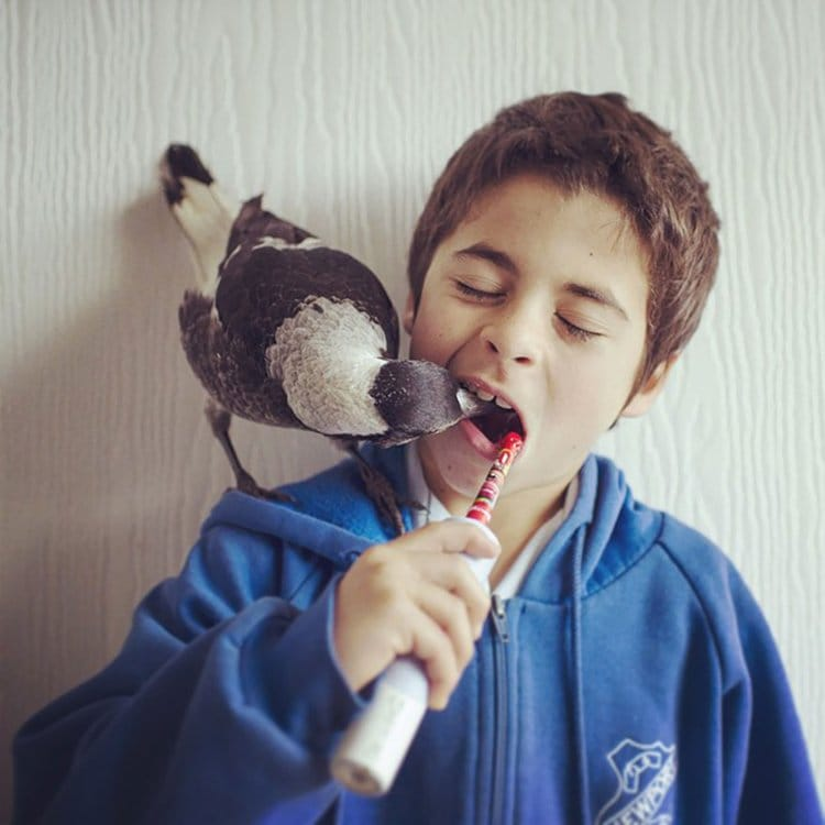 penguin-rescued-magpie-mouth