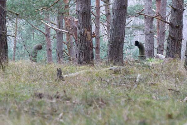 periscopes woods