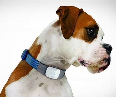pet gps tracker collar attachment