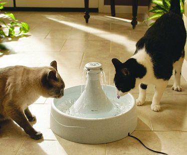 pet water fountain cats