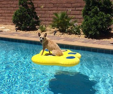 puncture resistant dog pool float inflatable paw