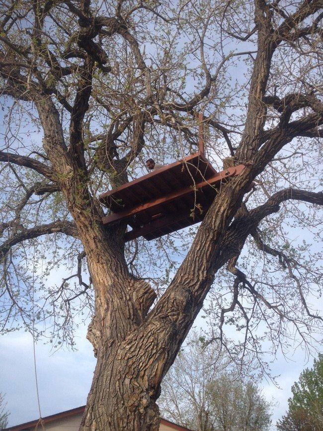 put-up-treehouse