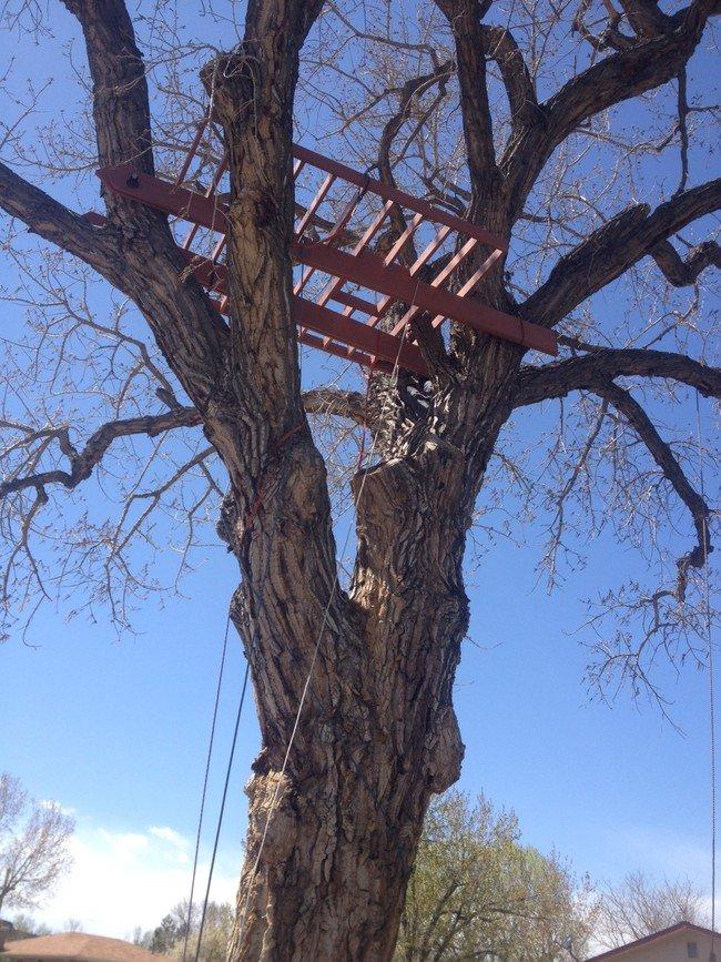 secure-treehouse-platform-in-tree