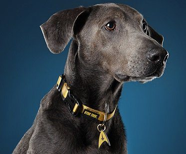 star trek dog collar