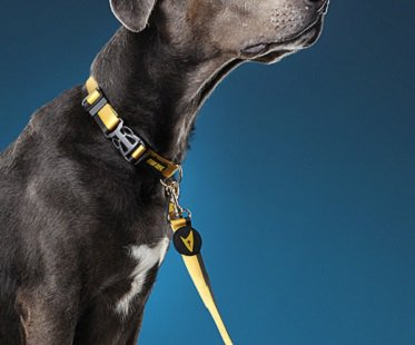 star trek dog leash