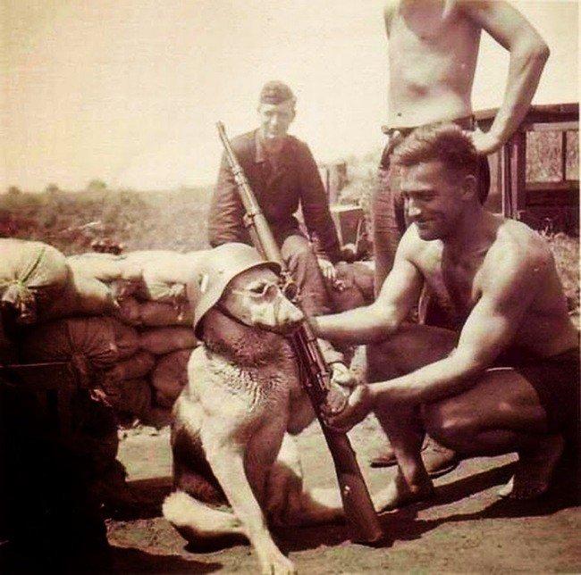 strange-history-dog