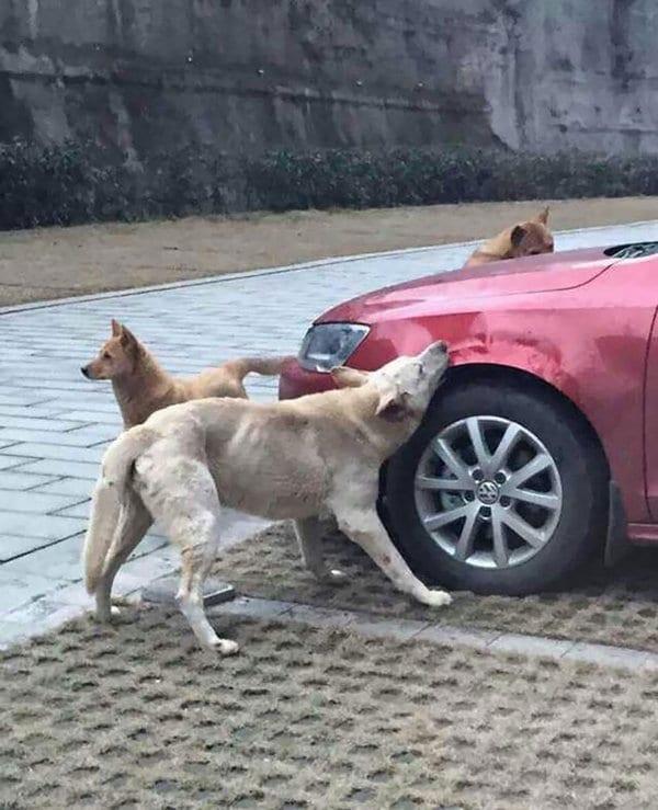 stray-dog-revenge
