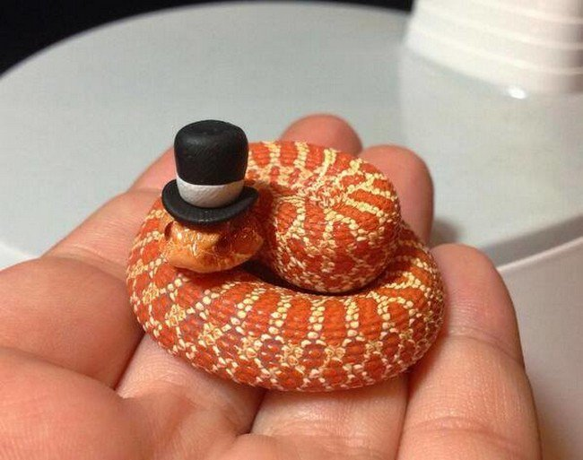 orange snake wearing a mini top hat