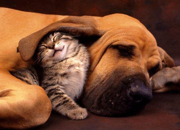 unlikely-sleeping-buddies-cat-dog