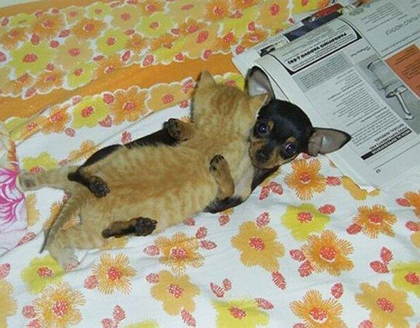 unlikely-sleeping-buddies-chi-kitten