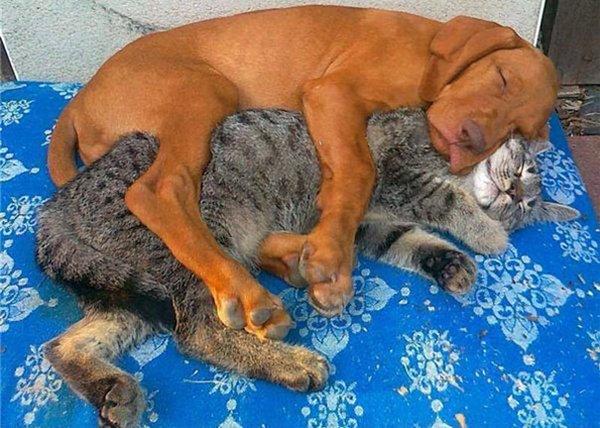 unlikely-sleeping-buddies-pup-cat
