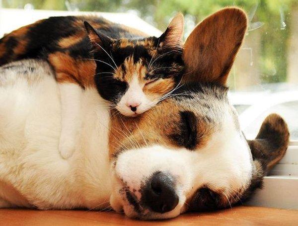 unlikely-sleeping-buddies