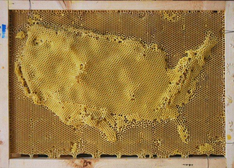 us map bee sculpture