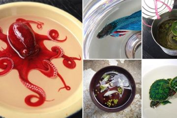 3D Animals Painted Into Resin