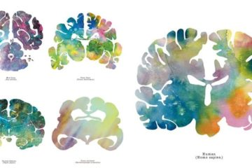 Abstract Paintings Animal Brains