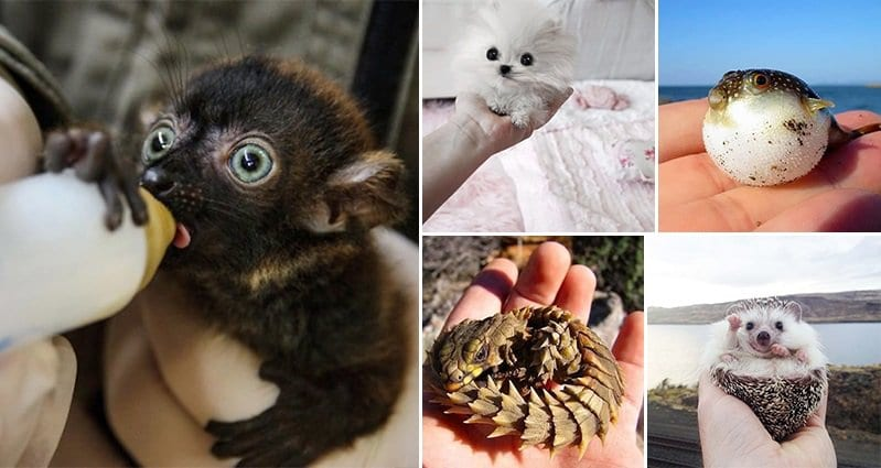 15 Super Cute Hand-Sized Baby Animals - Part 2