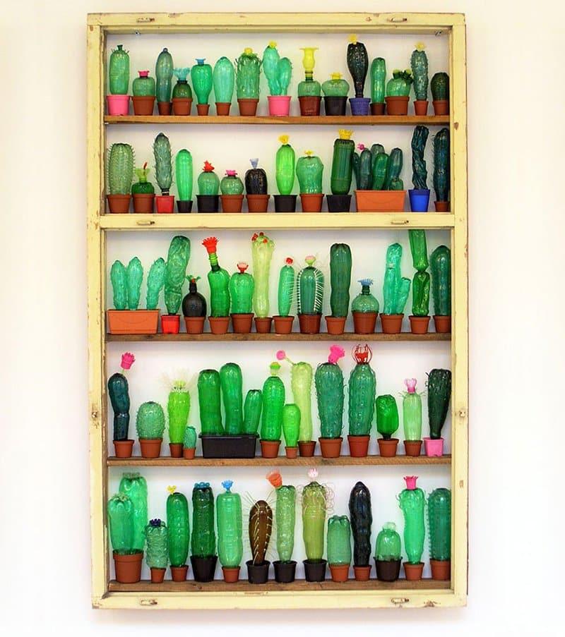 Bottle Cactuses