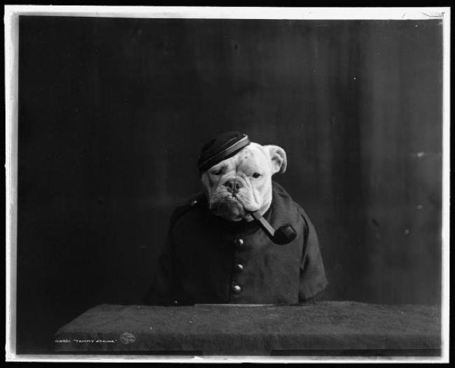 Bulldogs-1905-officer