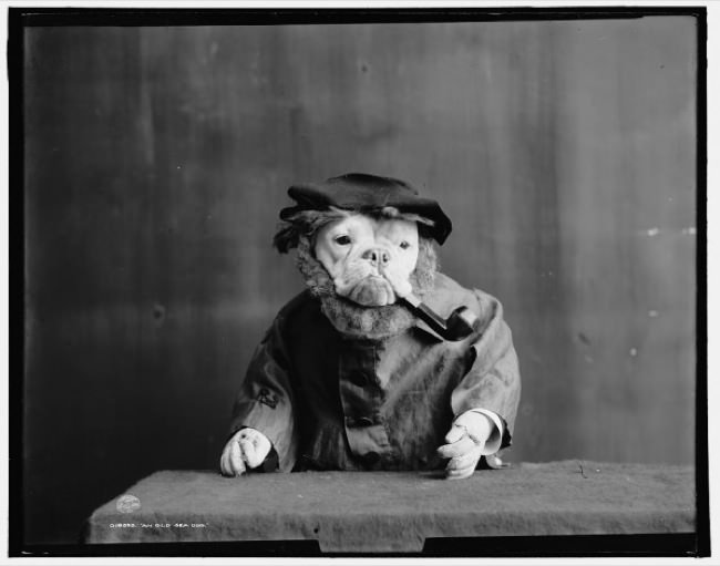 Bulldogs-1905-old-man