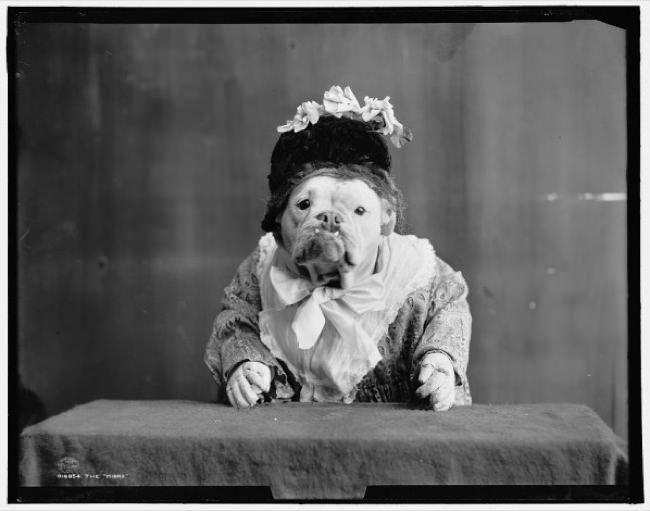 Bulldogs-1905-woman