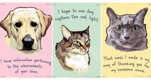 Cats And Dogs Confessions