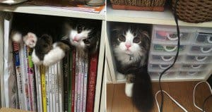 Cat Playing Hide And Seek