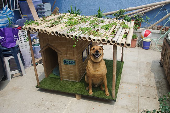 This Person Built Their Dog An Awesome Tropical Dog House