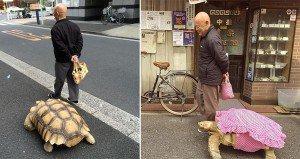 Giant Tortoise Tokyo