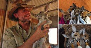 Man Kangaroo Mum