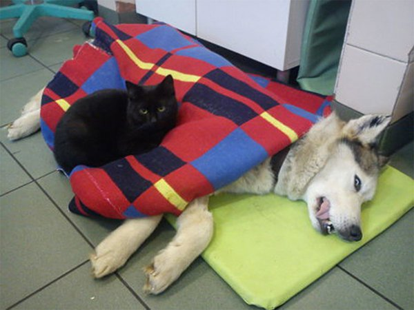 Nurse Cat And Dog
