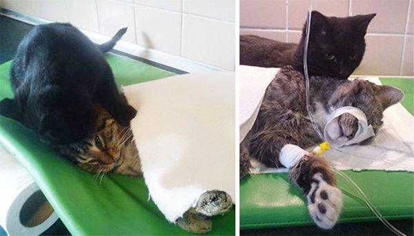 Nurse Cat Healer