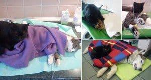 Radamenes Nurse Cat
