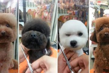 Square Circular Dog Grooming