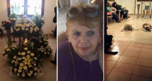 Stray Dogs turn up at funeral for woman