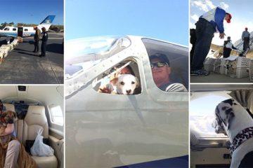 Volunteer Pilots Fly Shelter Dogs