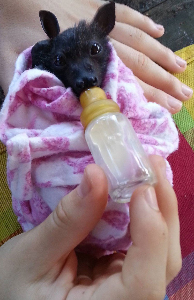 These Orphaned Baby Bats In Australia Have Found The Care