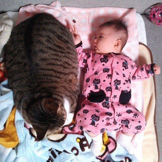 baby cat lying down