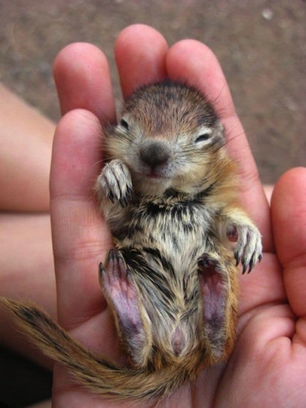 15 Super Cute Hand Sized Baby Animals Part 2