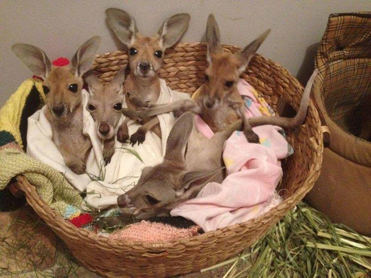basket-of-roos