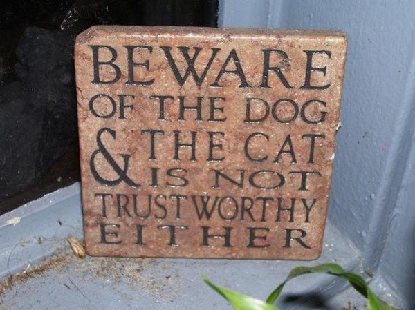 beware dog cat