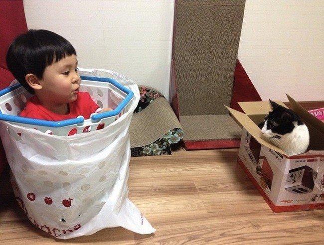 boy box cat box