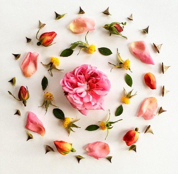 bridget-beth-collins-rose