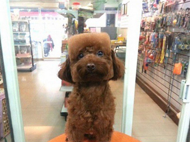 Square Or Round Haircuts For Dogs Is Fast Becoming The Latest And