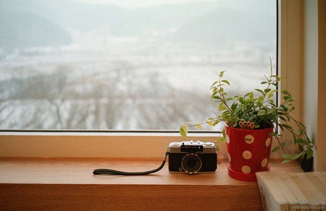 camera cafe camera plant window